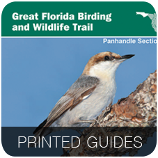 Printed Guides
